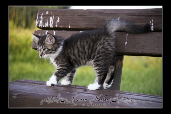 Kitten, Saint Paul Photography, Battle Creek Park