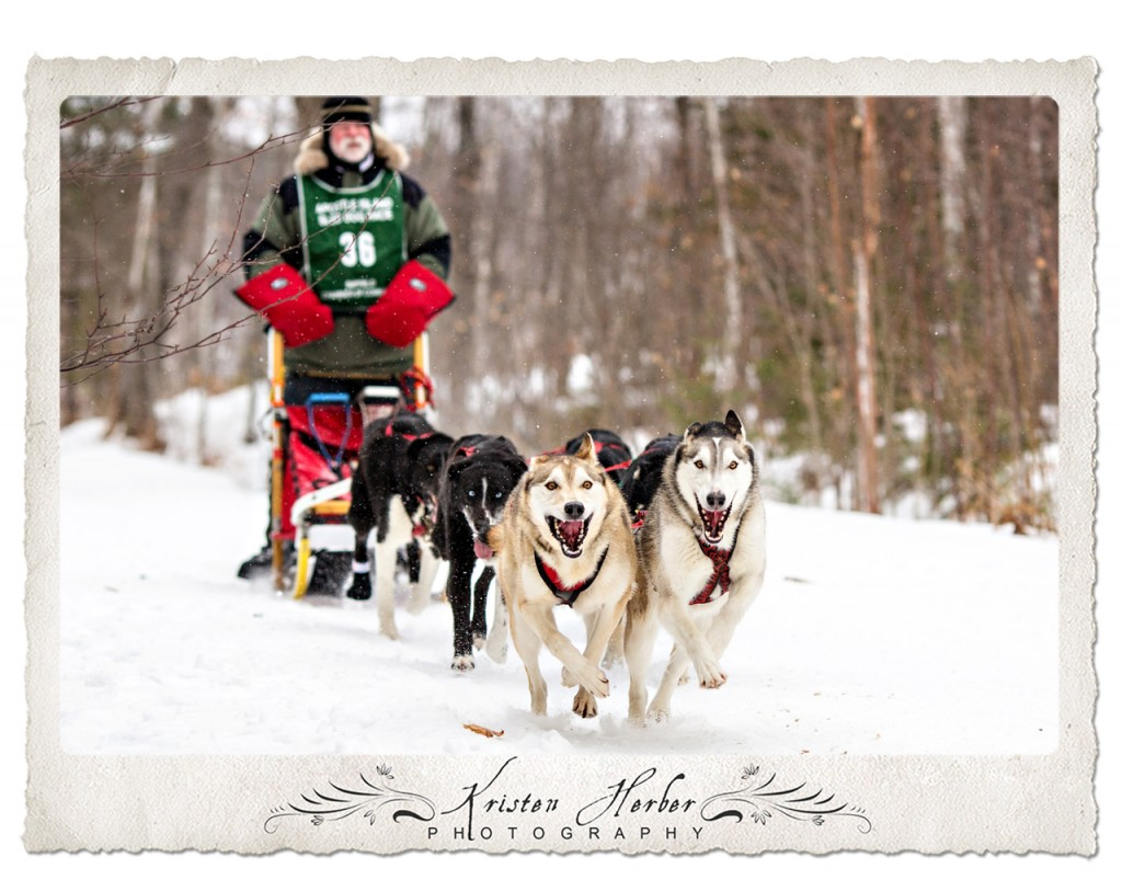 Apostle Island Dog Sled Race Bayfield WI 2015