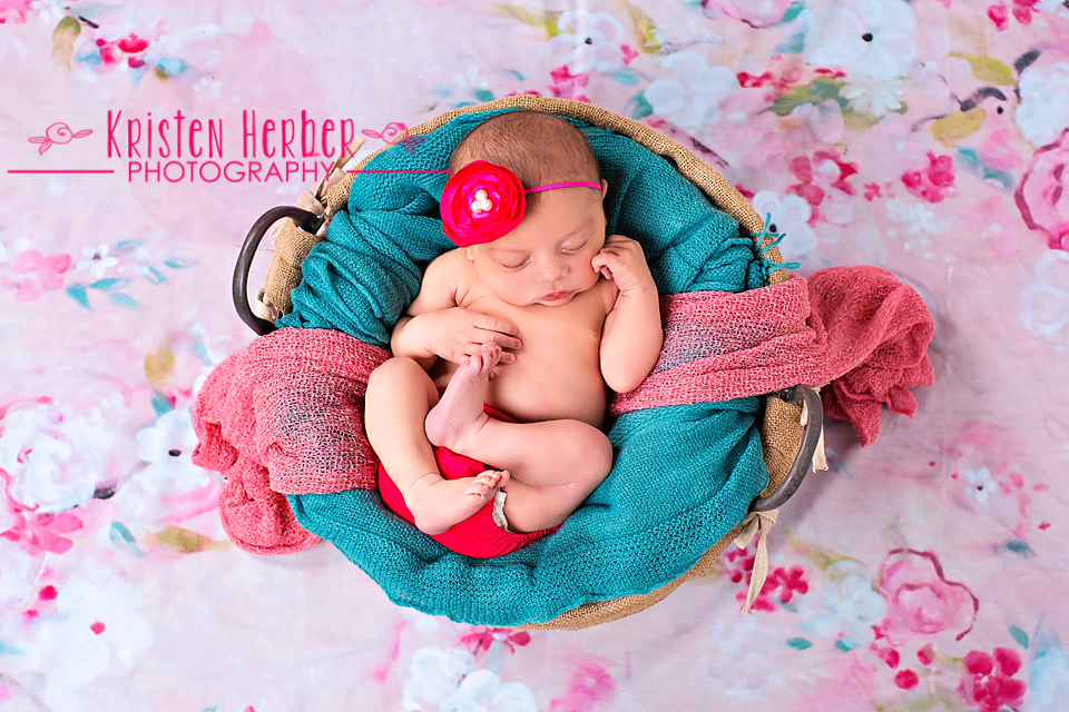 affordable newborn photographer mn