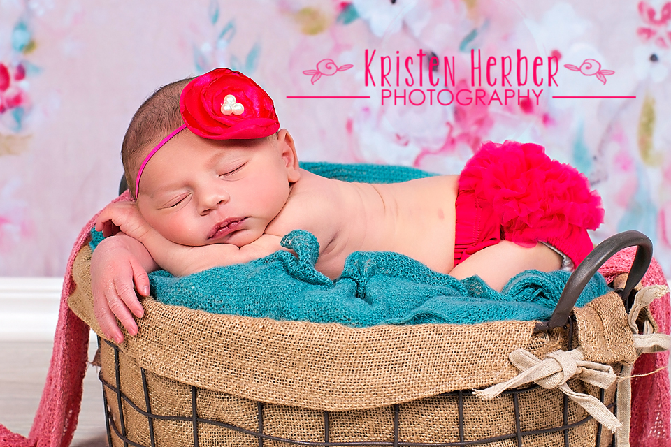 best newborn photographers in st paul